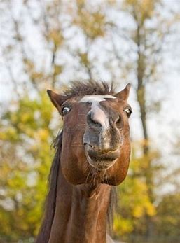 Image result for horse face