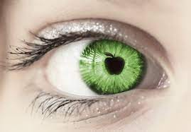 apple of one's eye - definition of apple of one's eye idiom